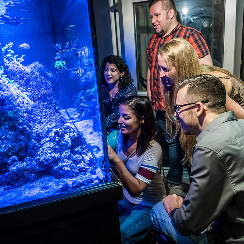 Visitors look at corals and fish in an aquarium.