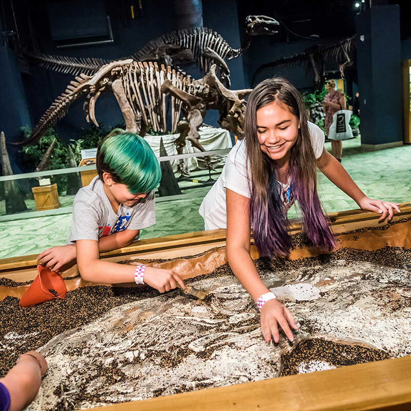 Youth digging for fossils in front of the triceratops skeleton.
