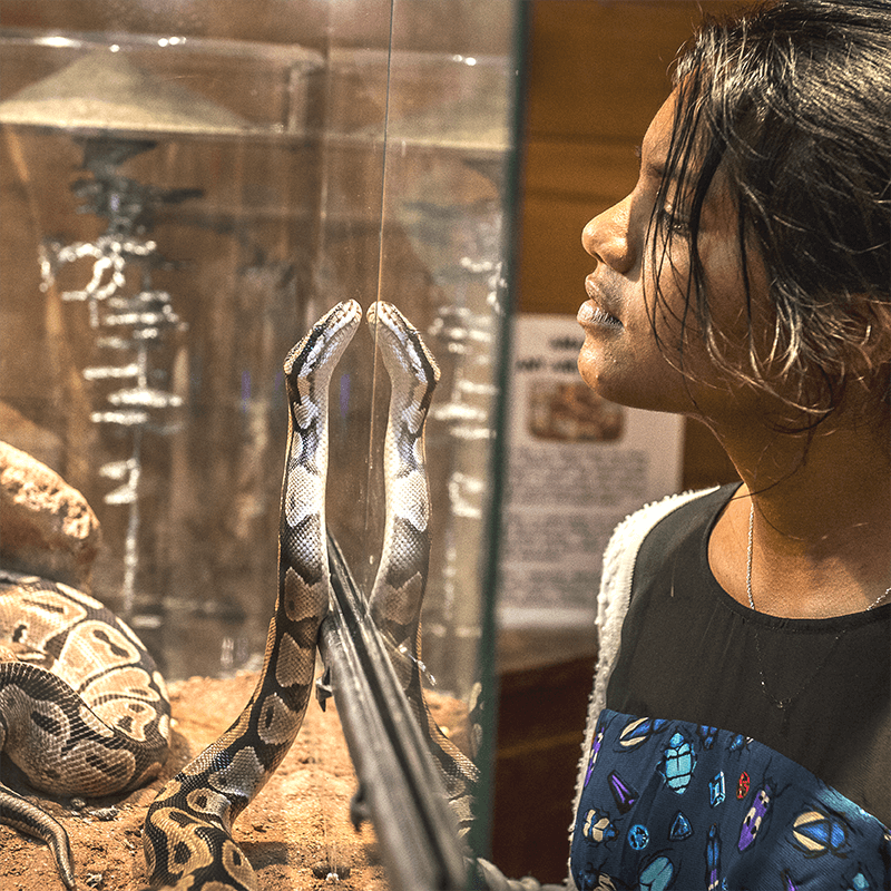 A girl puts her face up close against glass to see a snake.