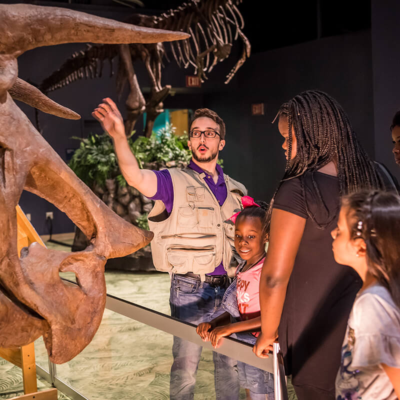 A Dino Safari guide points out the triceratops horns to a family.