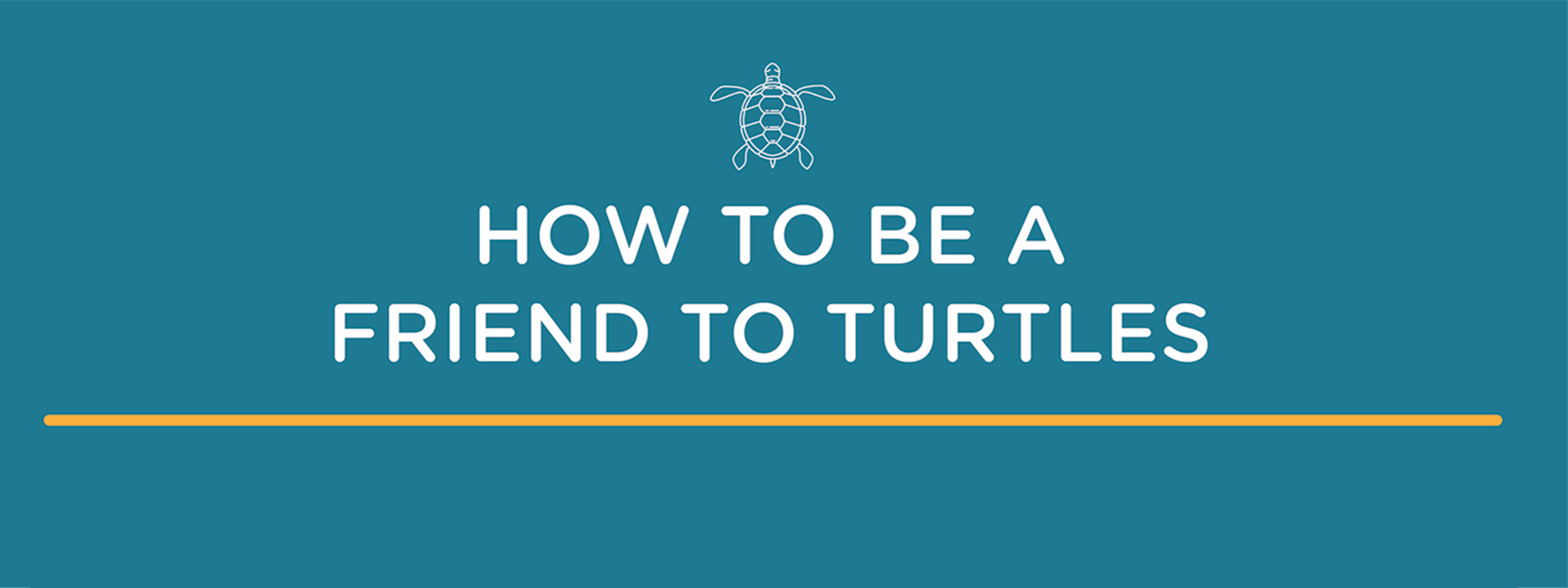 How to be a friend to turtles