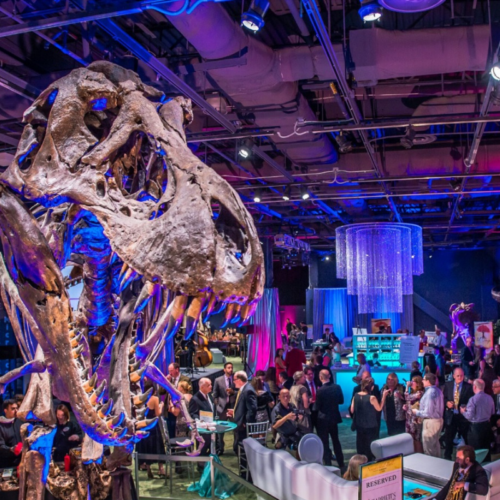 Photo of DinoDigs set up for holiday party