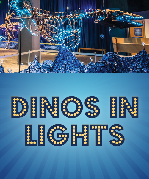 Dinos in Lights Graphic