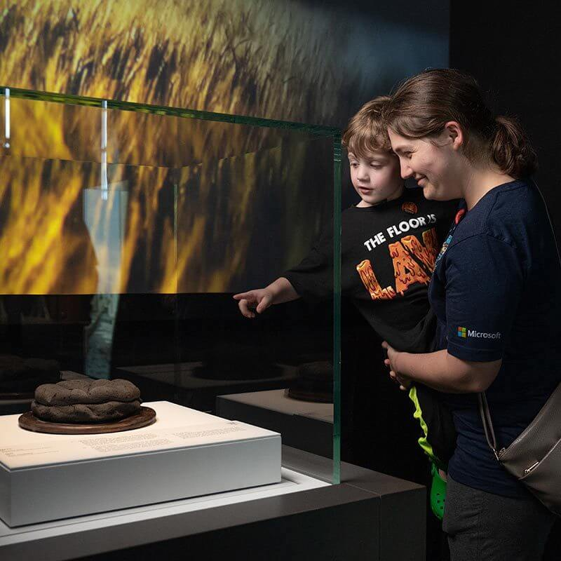 Child and caregiver interacting with display case of Pompeii artifact.