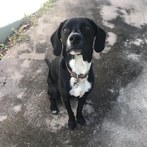 Image of black and white dog