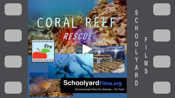 Schoolyard Films Website Image
