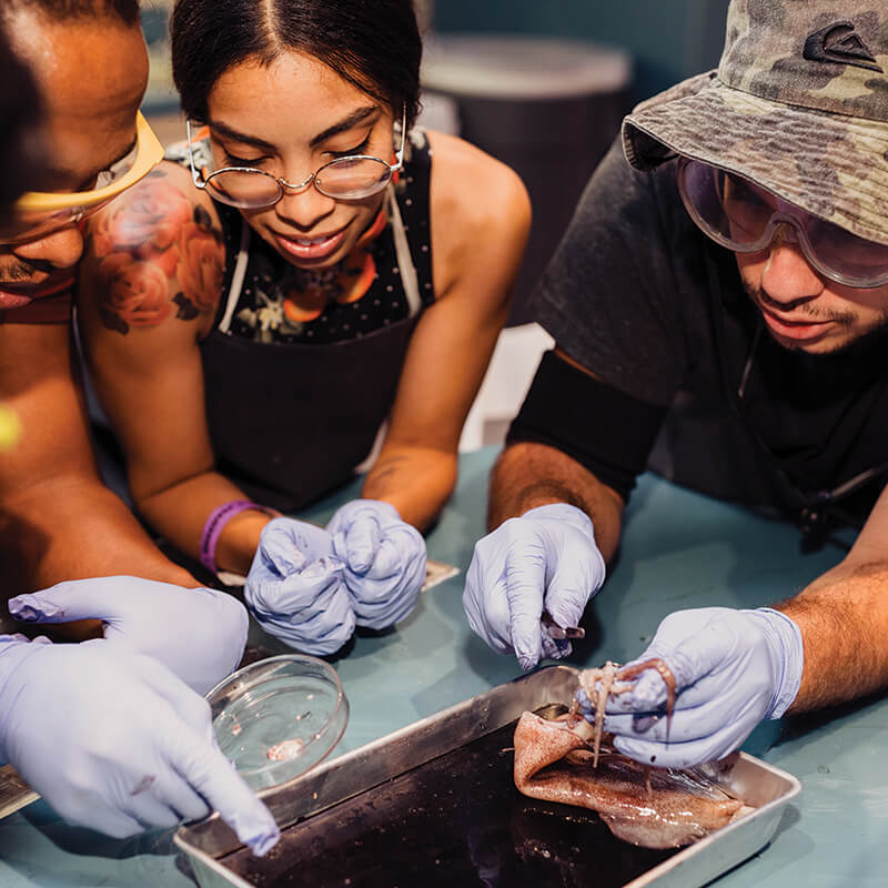 A group of adults dissecting a squid together during a biology lab in Dr. Dare's Lab..