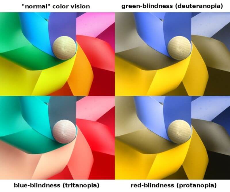 Graphic depicting how dogs see color differently