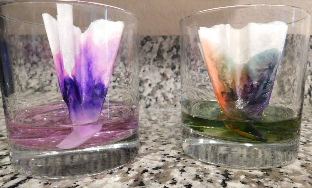 soak colorful coffee filters in water to see capillary action