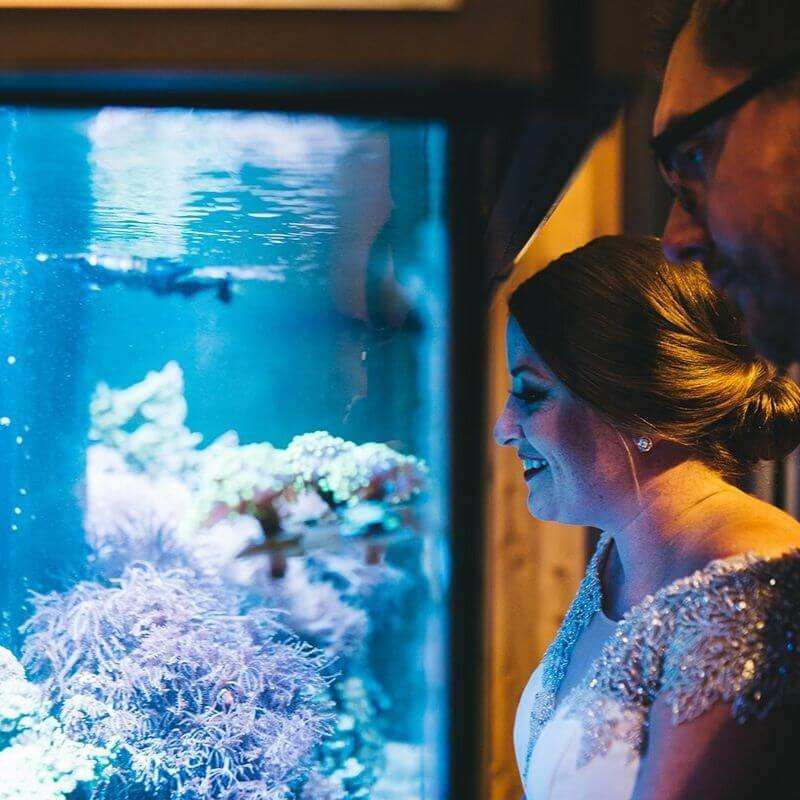 Best Wedding Portrait Backdrops in Orlando with animals
