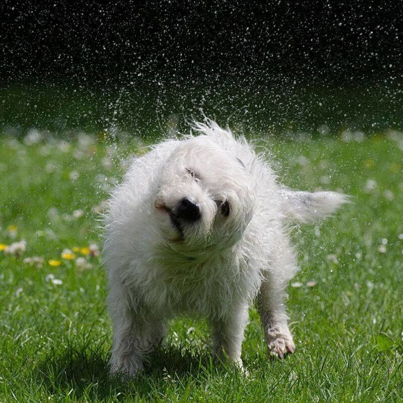 science of sound activity wet dog
