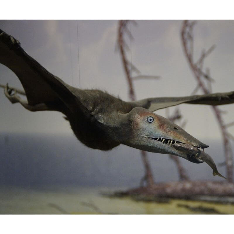 Pterodactyls are carnivores