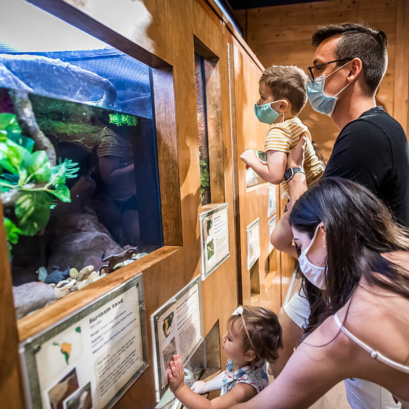 A family with young children explores animals together in the NatureWorks exhibit.