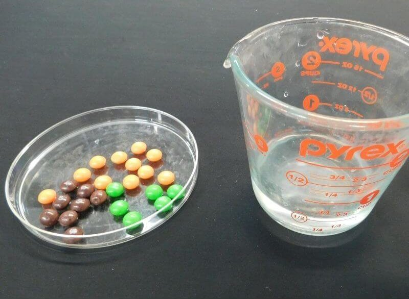 skittles in a dish and water -leftover candy materials