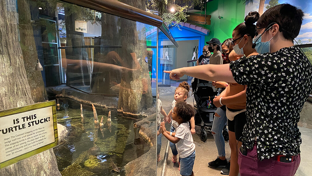 Guests learning about animals while looking into the Science Center swamp during a Keeper Talk.