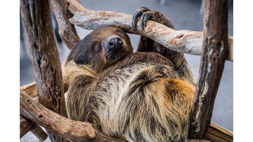 Orlando Science Center Sloth