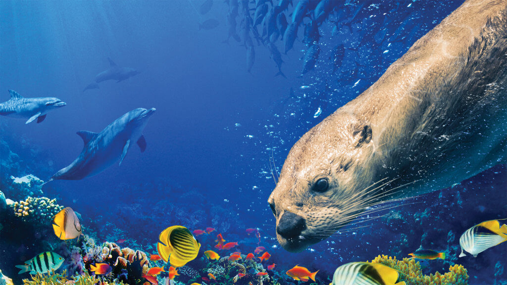 Underwater image from Oceans: Our Blue Planet