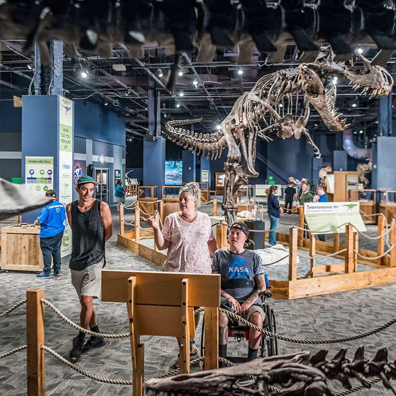 Guest travelling in a wheelchair looks at Elasmosaurus exhibit with two other guests in DinoDigs.