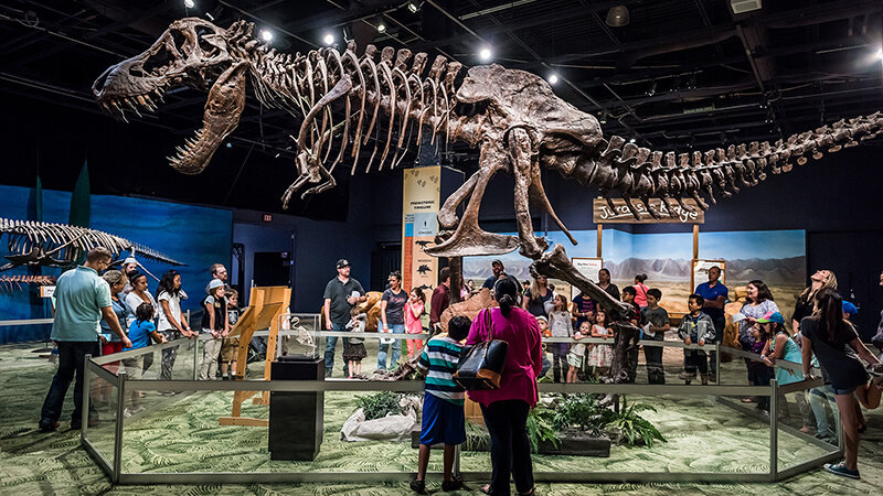 Group of guests all looking at large T-rex skeleton during a live presentation in DinoDigs.