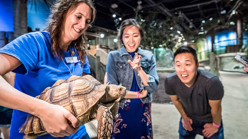 A volunteer holds up a tortoise for guests to get a closer look.