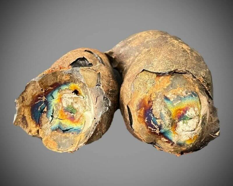 facts about rainbow fossilized feces